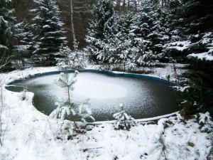 Das Schwimmbecken auf dem Grundstück in Basdorf